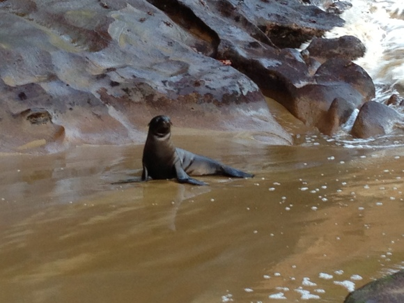 Baby sea lion at Punta Pitt, San Cristobal