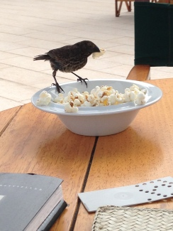 The finch shares my popcorn.