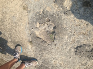 This is a very unphotogenic dinosaur footprint.
