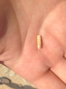 Another tiny fossil.
